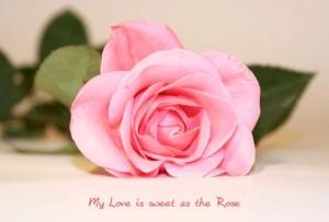 imagenes de amor con una rosa 2