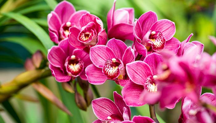 orquideas para san valentín
