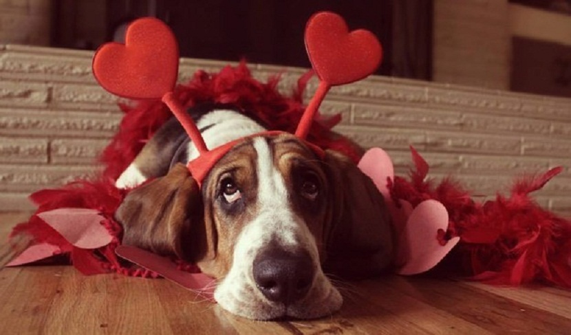 san valentín mascotas