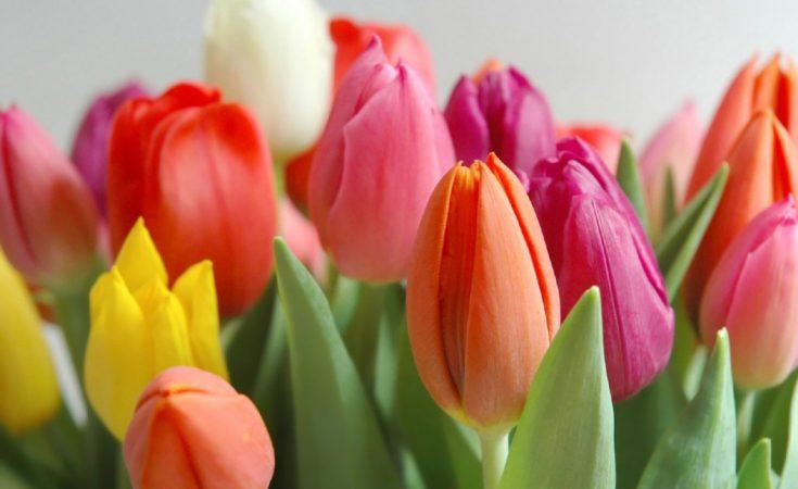 tulipanes para san valentin